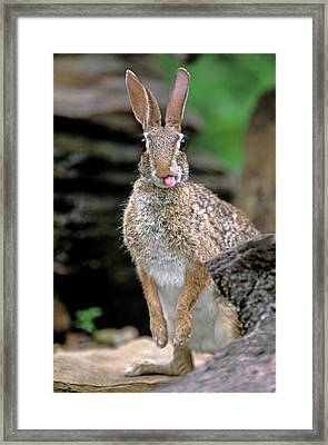 Usa, Texas, Rio Grande Valley Framed Print by Jaynes Gallery