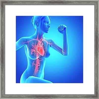 Vascular System Of Jogger Framed Print