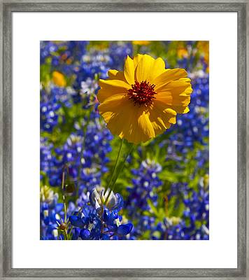 Framed Print featuring the photograph Wildflowers by John Babis