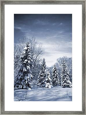 Winter Forest Framed Print by Elena Elisseeva