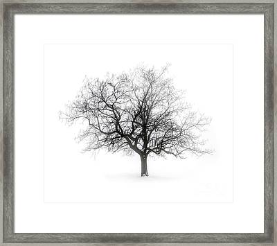 Winter Tree In Fog Framed Print by Elena Elisseeva