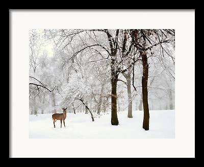 Does. Winter Framed Prints
