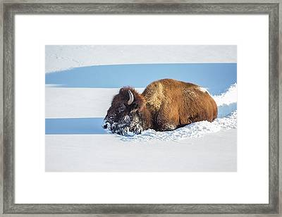 Wyoming, Yellowstone National Park Framed Print