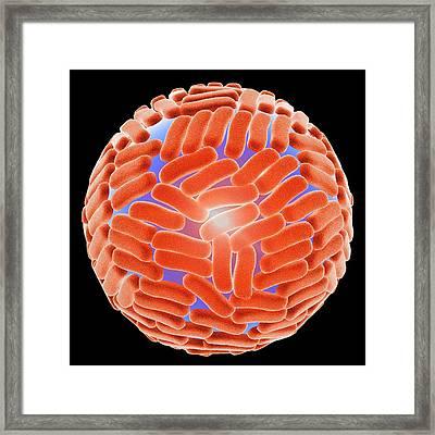 Zika Virus Framed Print