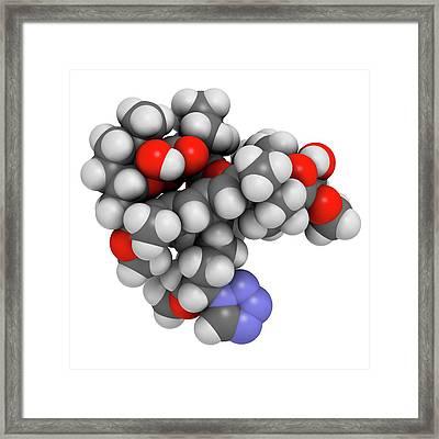 Zotarolimus Immunosuppressant Molecule Framed Print by Molekuul