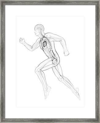 Sprinter Framed Print by Sciepro/science Photo Library