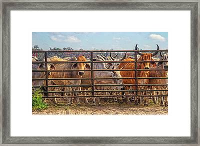 4025_204 Framed Print by Lewis Mann