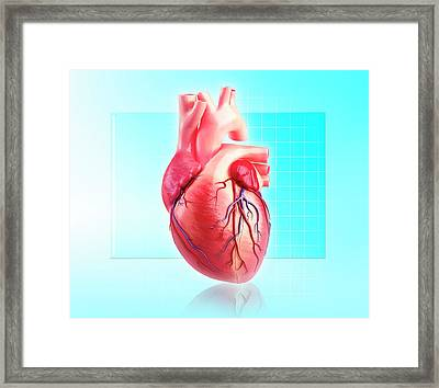 Human Heart Framed Print by Pixologicstudio/science Photo Library