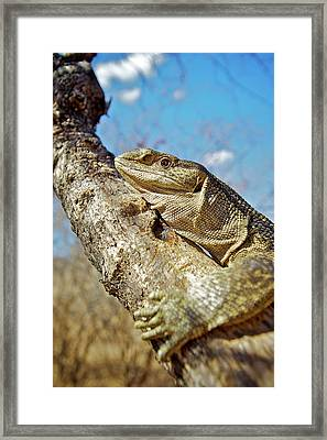 Untitled Framed Print by Shannon Benson