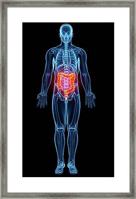 Male Anatomy Framed Print by Pixologicstudio/science Photo Library