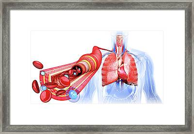 Human Artery Framed Print by Pixologicstudio