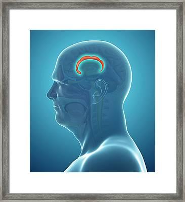 Brain Anatomy Framed Print by Pixologicstudio/science Photo Library