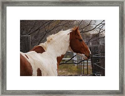 Paint Stallion Framed Print