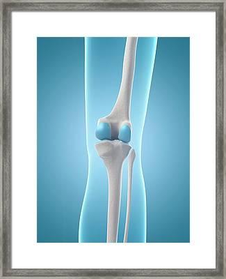 Human Knee Joint Framed Print
