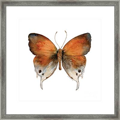 47 Mantoides Gama Butterfly Framed Print by Amy Kirkpatrick
