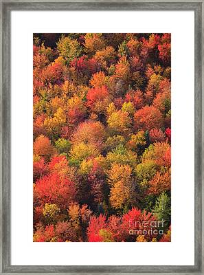 Aerial View Of Fall Foliage In Vermont Framed Print