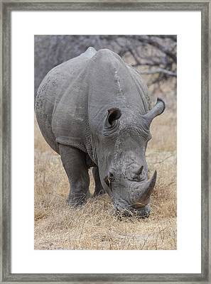 Africa, South Africa, Londolozi Private Framed Print by Jaynes Gallery