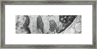 Alveolar Cell Framed Print