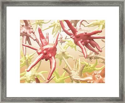 Amoebae Framed Print by Maurizio De Angelis