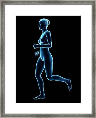 Anatomy Of Runner Framed Print