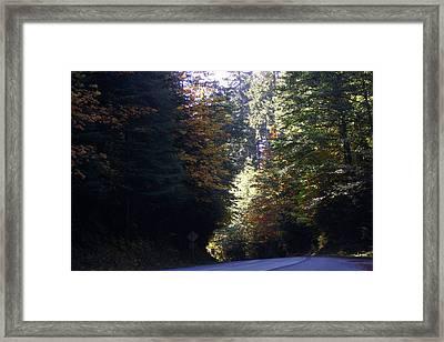 Autumn 4 Framed Print