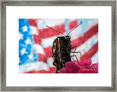 Black Swallowtail Framed Print by Iris Richardson