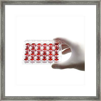Blood Samples Framed Print by Science Photo Library