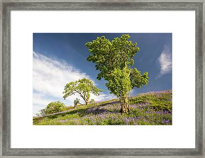 Bluebells Growing On A Limestone Hill Framed Print