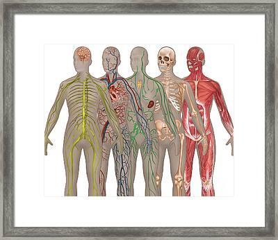 5 Body Systems In Female Anatomy Framed Print