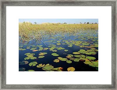 Botswana, Okavango Delta Framed Print