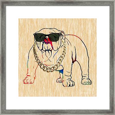 Bulldog Collection Framed Print