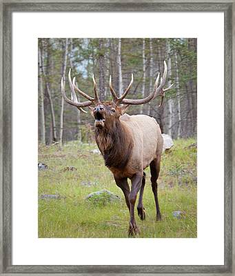 Canada, Alberta, Jasper National Park Framed Print by Jaynes Gallery