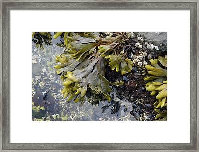 Canada, British Columbia, Gulf Islands Framed Print by Kevin Oke