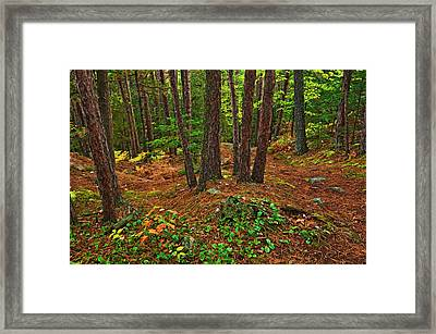 Canada, Ontario, Killarney Provincial Framed Print by Jaynes Gallery