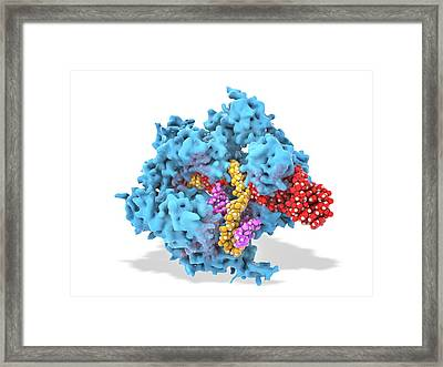 Crispr-cas9 Gene Editing Complex Framed Print by Ramon Andrade 3dciencia
