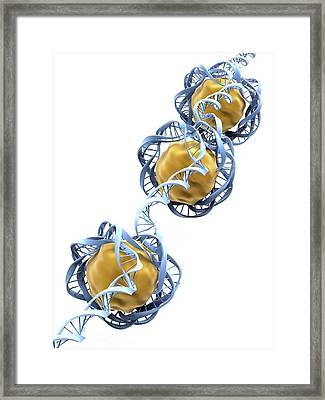 Dna Packaging Framed Print by Alfred Pasieka