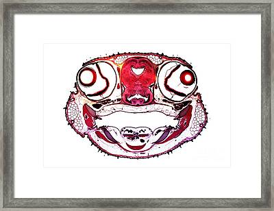 Dogfish Head, Transverse Section Framed Print