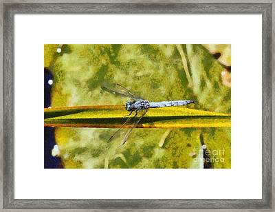 Dragonfly Framed Print by George Atsametakis