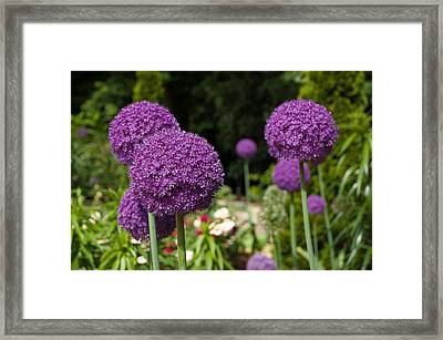 Duke Gardens Framed Print by Gene Hilton
