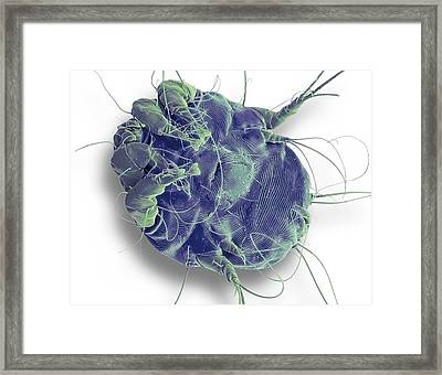 Dust Mite. Sem Framed Print by Steve Gschmeissner