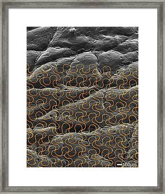 Electronic Circuit Printed Onto Skin Framed Print by Professor John Rogers, University Of Illinois