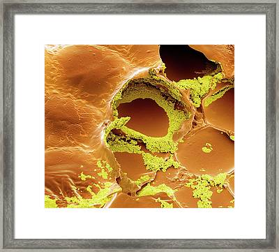 Electronic Ink Framed Print by Steve Gschmeissner