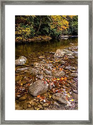 Fall Color Gauley River Framed Print by Thomas R Fletcher