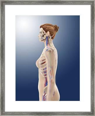 Female Anatomy, Artwork Framed Print by Science Photo Library