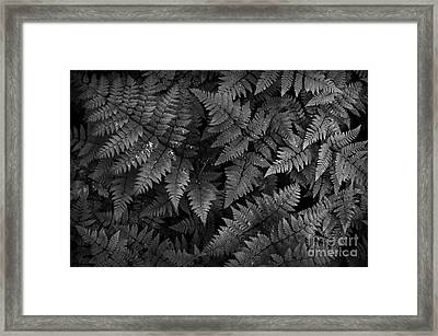 Ferns Framed Print by Steve Patton