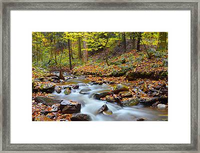 Forest Stream In Autumn Framed Print