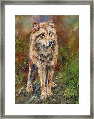 Grey Wolf Framed Print by David Stribbling