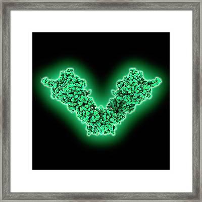 Heat Shock Protein 90 Chaperone Complex Framed Print