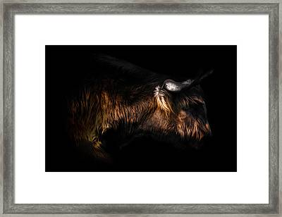 Highland Cow Framed Print by Ian Hufton