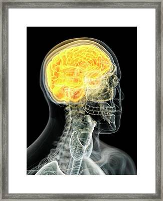 Human Brain Framed Print by Sciepro